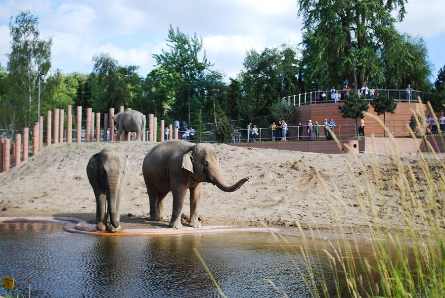 Копенгагенский зоопарк, Копенгаген, Дания, Европа