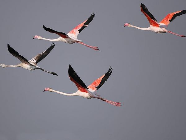 В Турции появился огромный остров для фламинго